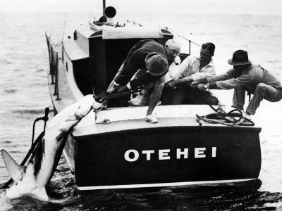 Swordfish Haul!--Photographic Print