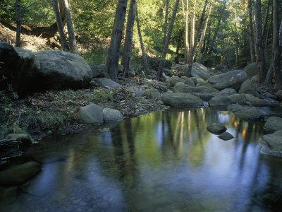 https://imgc.artprintimages.com/img/print/sycamore-trees-reflected-in-arroyo-hondo-creek_u-l-p8b3m90.jpg?p=0