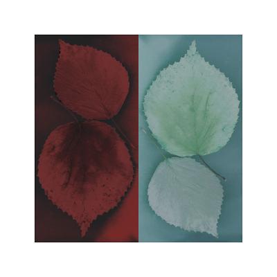 Sycamore-Jane Ann Butler-Giclee Print