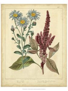 Garden Flora I by Sydenham Edwards