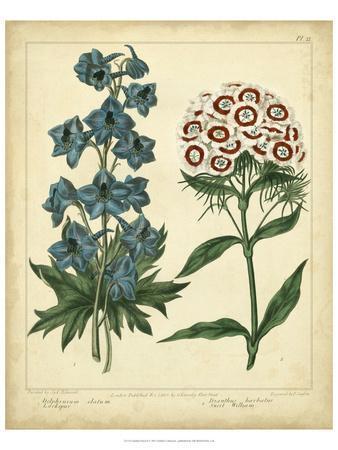 Garden Flora II