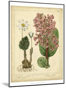 Garden Flora III by Sydenham Edwards