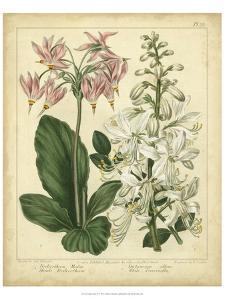 Garden Flora IV by Sydenham Edwards
