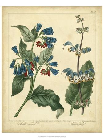 Garden Flora V