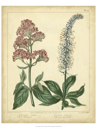 Garden Flora VI