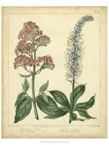 Garden Flora VI by Sydenham Edwards