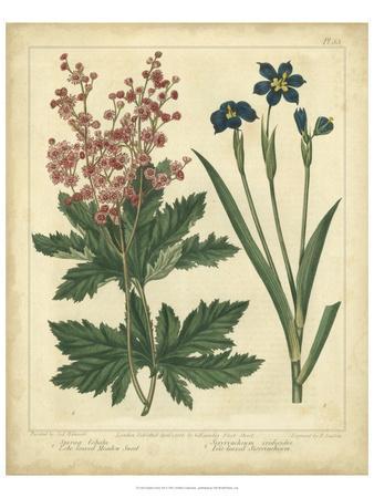 Garden Flora VII