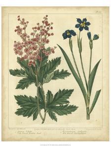 Garden Flora VII by Sydenham Edwards