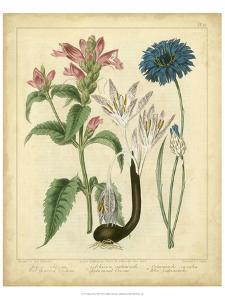 Garden Flora VIII by Sydenham Edwards
