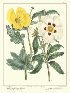 Gardener's Delight III by Sydenham Teast Edwards