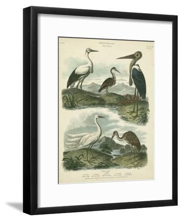Heron and Crane Species I
