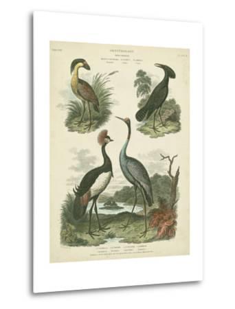 Heron and Crane Species II