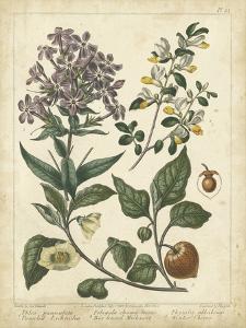 Non-Embellish Enchanted Garden II by Sydenham Teast Edwards