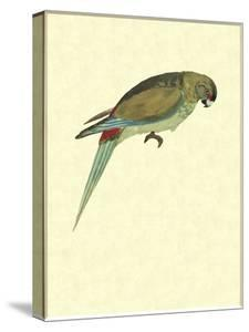 Beautiful Parakeet & Rosella canvas artwork for sale, Posters and