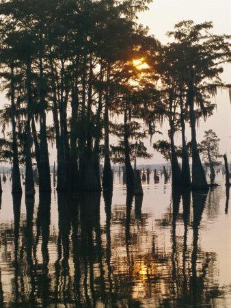 Atchafalaya Swamp, 'Cajun Country', Louisiana, USA