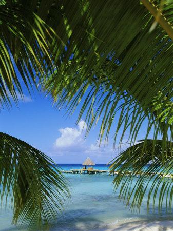 Palm Fronds and Beach, Rangiroa Atoll, Tuamotu Archipelago, French Polynesia, South Pacific Islands
