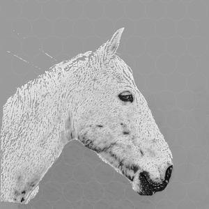 A horse name Sucré, 2015 by Sylver Bernat