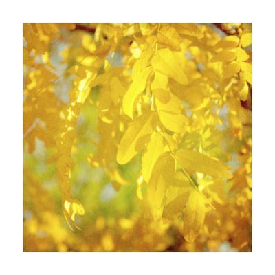 Autumn Photography IV