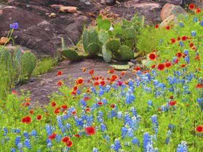 Blanket flowers and bluebonnets. Texas Hill Country, north of Buchanan Dam