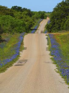 Dirt road Texas Hill Country lined with blue Bonnets. by Sylvia Gulin