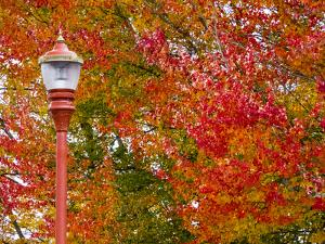 Fall color in downtown Issaquah by Sylvia Gulin