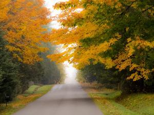 Fall colors with golden leaves of bigleaf maple and country lane by Sylvia Gulin
