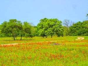 Springtime wildflower field with dirt road just south of Independence Texas by Sylvia Gulin