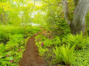 The Japanese garden at the Gardens of Hatley Castle with path leading to a pond by Sylvia Gulin