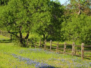 Wildflowers along Highway 29 between Llano and Buchanan Dam, Texas Hill Country by Sylvia Gulin