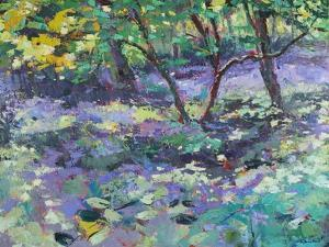 Bluebell Glade by Sylvia Paul