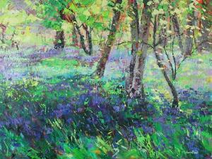 Sunshine and Bluebells by Sylvia Paul