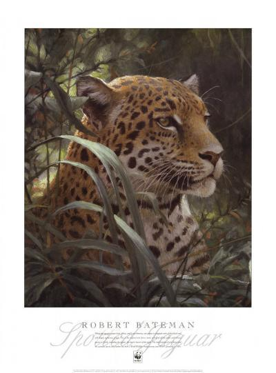 Symbol of the Rainforest-Robert Bateman-Art Print