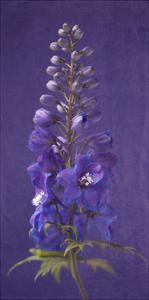 Purple Foxgloves 2 by Symposium Design