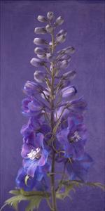 Purple Foxgloves 3 by Symposium Design