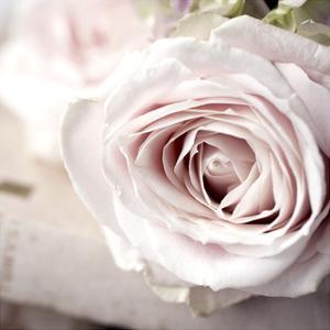 Vintage Rose by Symposium Design