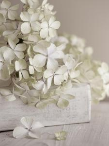 White Flowers by Symposium Design
