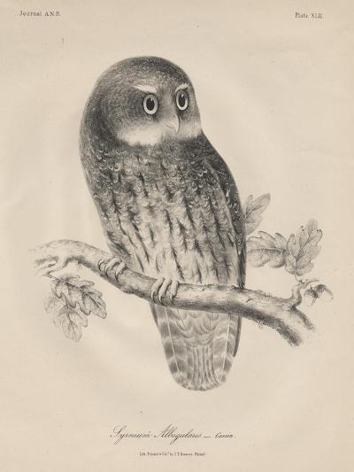Syrnium Albogularis, 1850-William E. Hitchcock-Giclee Print