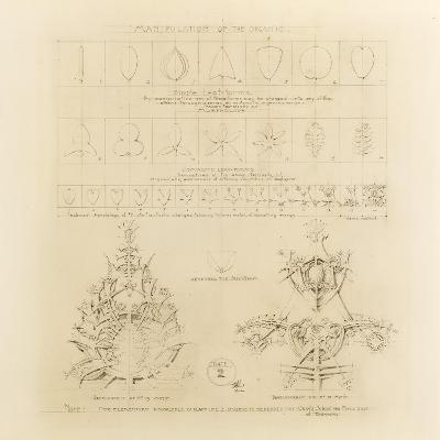 System of Architectural Ornament: Plate 2, Manipulation of the Organic, 1922-23-Louis Sullivan-Giclee Print