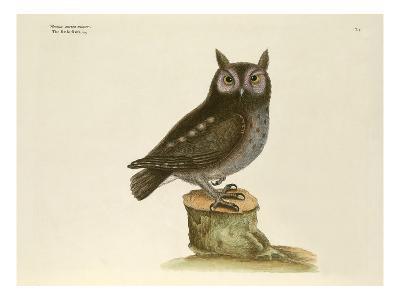 T. 7-Mark Catesby-Giclee Print
