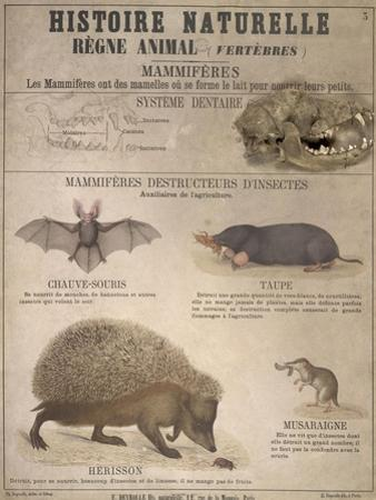 A Bat, Mole and Hedgehog by T. Deyrolle