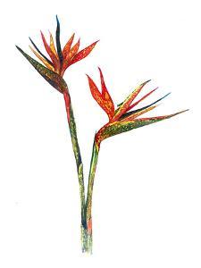 Bird Of Paradise by T.J. Heiser