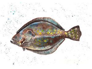Flounder 1 by T.J. Heiser