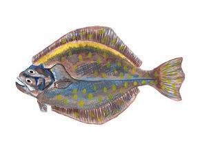 Flounder 2 by T.J. Heiser
