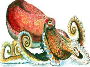 Octopus 1 by T.J. Heiser