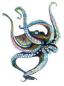 Octopus 4 by T.J. Heiser