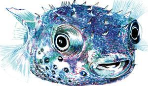 Puffer Fish 2 by T.J. Heiser
