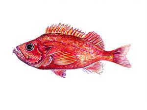 Redfish 2 by T.J. Heiser