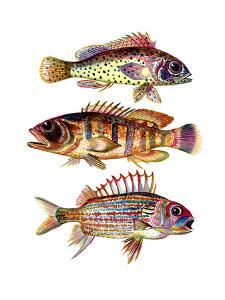 Three Fish Red by T.J. Heiser