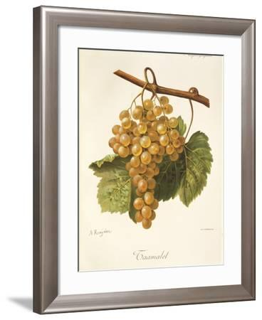 Taamalet Grape by a Kreyder--Framed Giclee Print