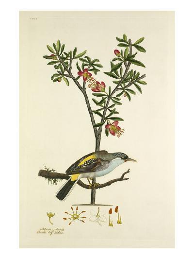 Tab LVI-John Frederick Miller-Giclee Print